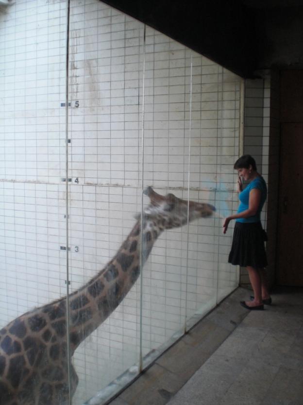 GiraffenhausZooLiberec3