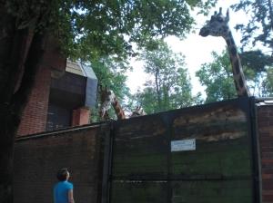 GiraffenZooLiberecAußen
