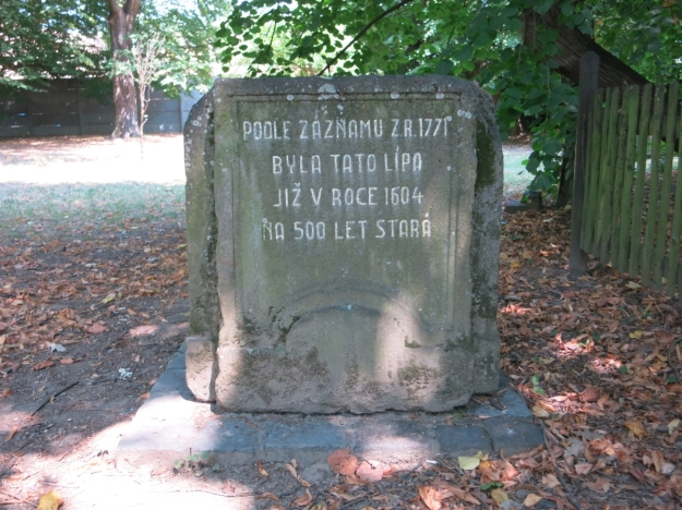 Laut einer Aufzeichnung aus dem Jahre 1771 war diese Linde schon im Jahre 1604 an die 500 Jahre alt