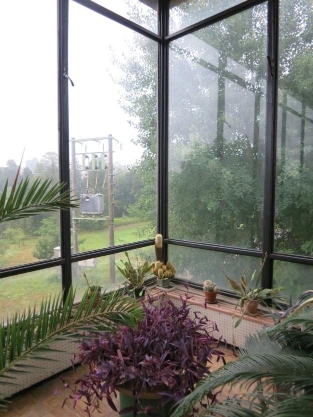 NádražíČeskáTřebováWarteraumPflanze