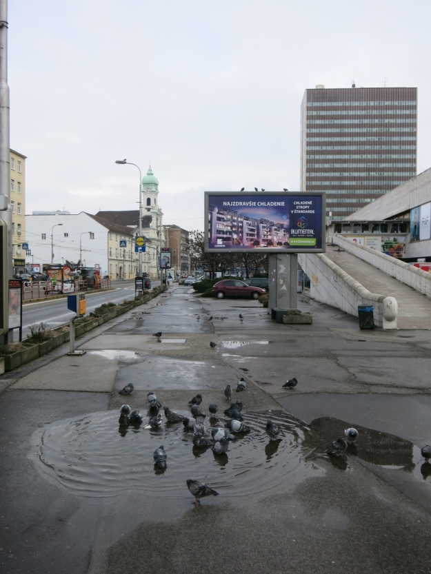 BadendeTaubenPriorBratislava