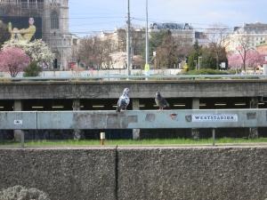 TaubenGeländerSchottentor